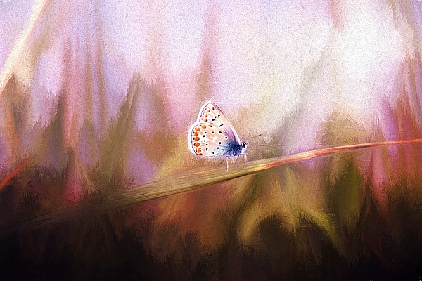 Jaroslav Buna - Common Blue Butterfly