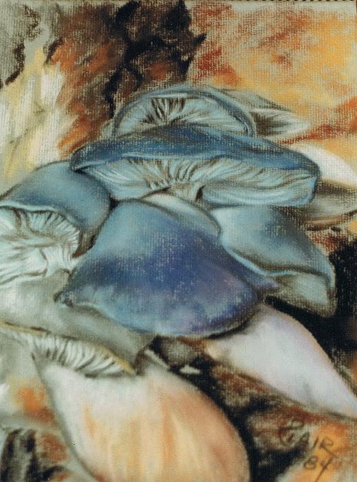 Barbara Keith - Polyozellus Multiplex
