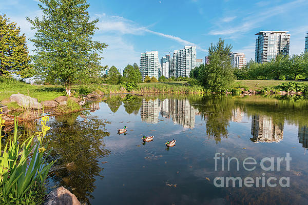 Viktor Birkus - Pond with herons and floating ducks in Vancouver BC