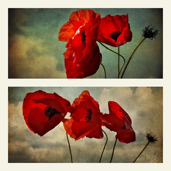Ellen Van Deelen - Poppies