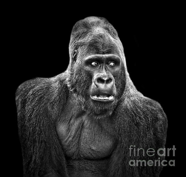 Jim Fitzpatrick - Portrait of King Kongs Cousin IV