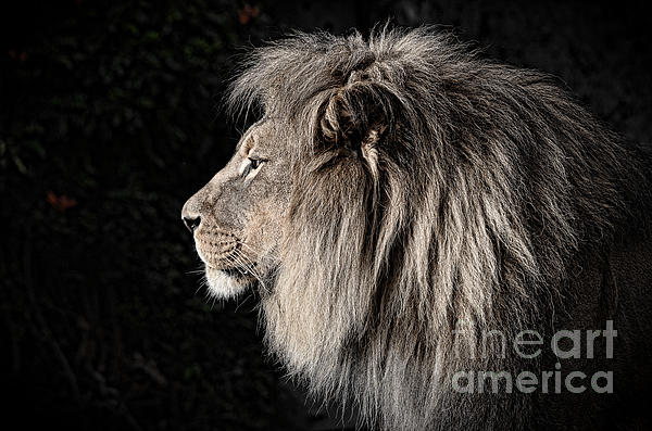 Jim Fitzpatrick - Portrait of the King of the Jungle II