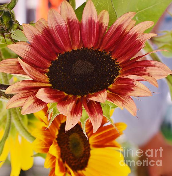 Kathleen Struckle - Power Flower