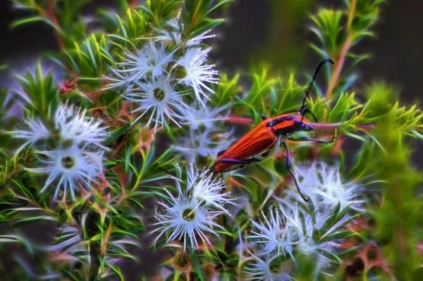 Miroslava Jurcik - Pretty Bug At North Head