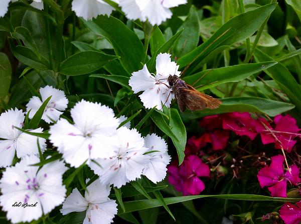 Debra Lynch - Pretty Little Butterfly