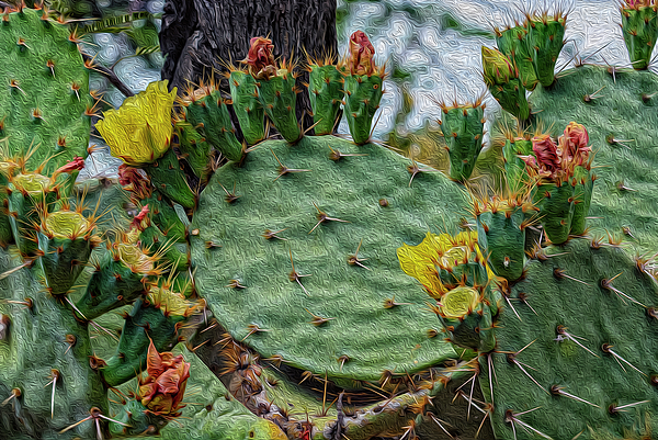 Prickly Pear Flowers Op46 Photograph