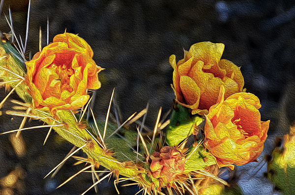 Prickly Pear Flowers Op49 Photograph