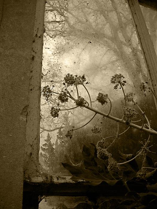 Julia Raddatz - Privileged Plant
