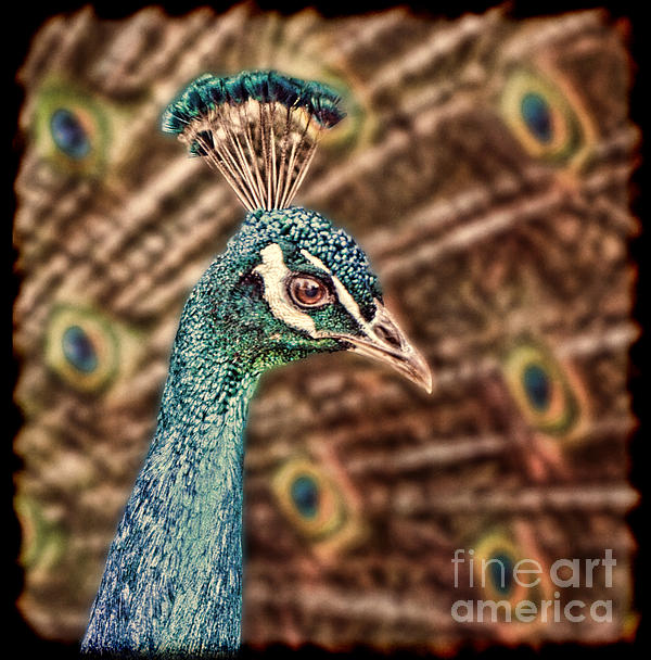 Jim Fitzpatrick - Profile Portrait of a Peacock II