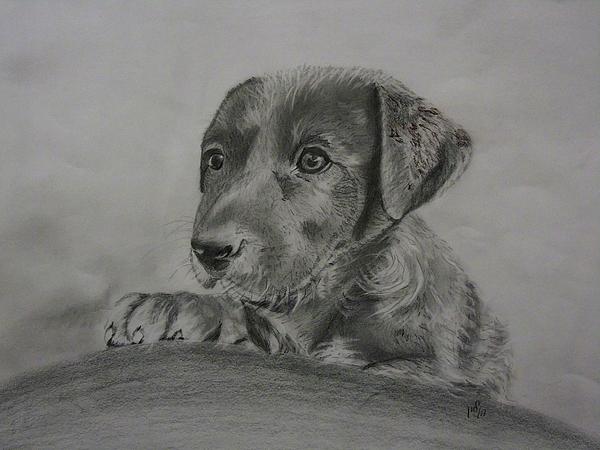 Maria Woithofer - Puppy 20