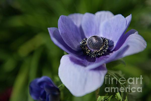 Dale Powell - Purple Flower Power
