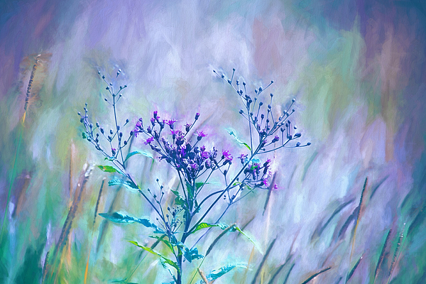 Sharon McConnell - Purple Meadow Grass