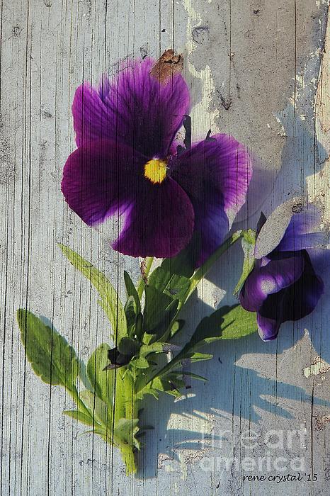 Rene Crystal - Purple Pansies Rule...