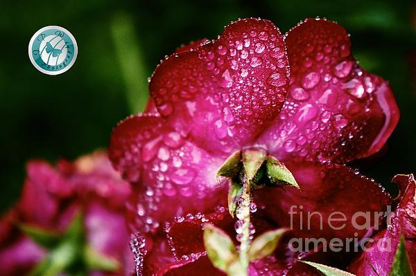 Jannice Walker - Rain Kissed Rouge 2