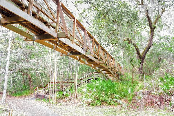 John M Bailey - Ravine Gardens Abstract