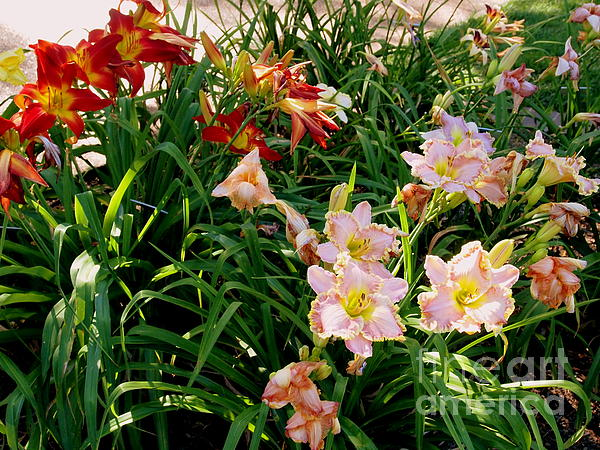 Nancy Kane Chapman - Red and Pink Day Lilies
