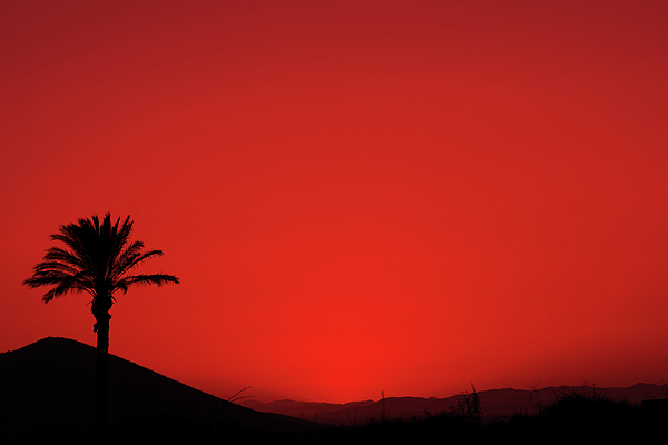 Anna Maloverjan - Red Andalusian sunset with silhouette palm tree and mountain