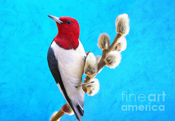Laura D Young - Red Headed Woodpecker