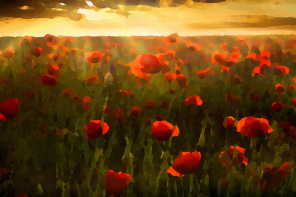 Shelli Fitzpatrick - Red Poppies in the Sun