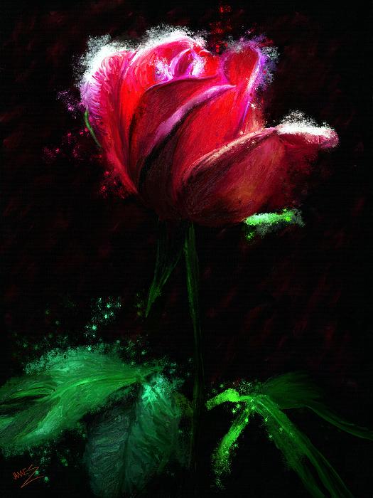 James Shepherd - Red Rose
