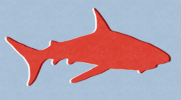 Red Shark Mixed Media