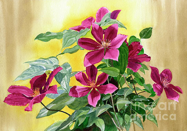 Sharon Freeman - Red Violet Clematis with Gold Background