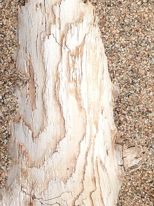 Sylvie Marie - Resting - Driftwood in Sand