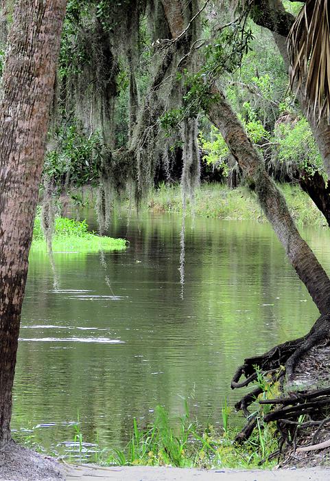 Rosalie Scanlon - River Scenic