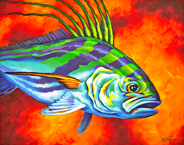 Tish wynne website for Rooster fish pictures