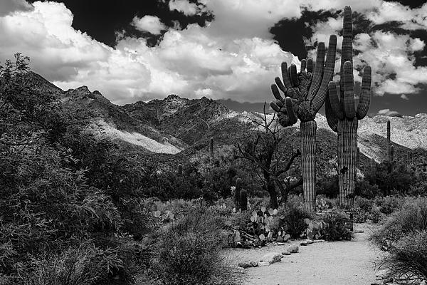 Sabino Canyon No5 Photograph
