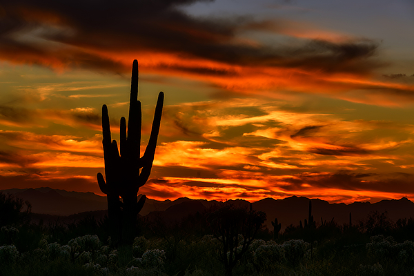 Saguaro Sunset H51 Photograph