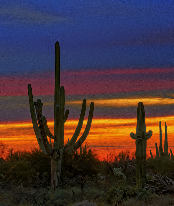 Saguaro Sunset V31 Photograph