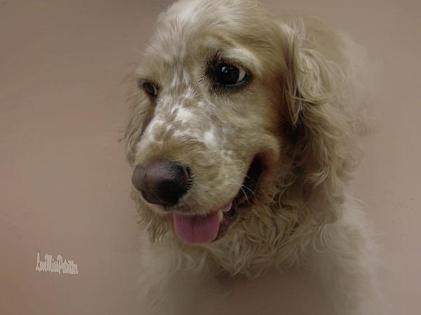 Miss Pet Sitter - Saint Shaggy Portrait 28