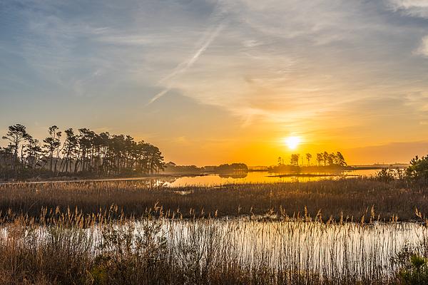 Steven Ainsworth - Salt Marsh Sunrise I