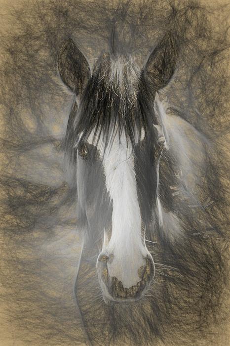 Teresa Wilson - Salt River Stallion