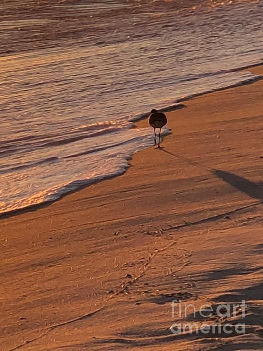 Luther Fine Art - Sandpiper on the Beach