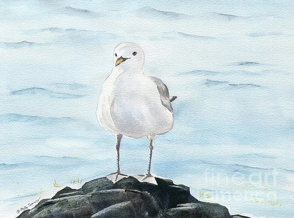 Melly Terpening - Seagull 2