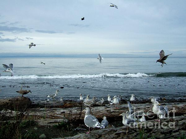 Delores Malcomson - Seagulls and Waves on the Strait of Juan de Fuca