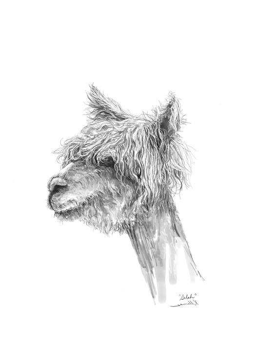 Selah Drawing