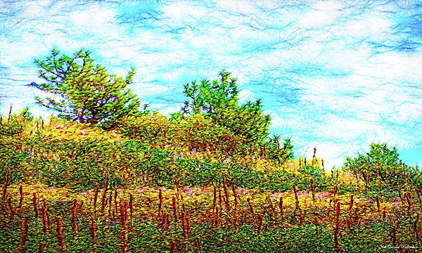Joel Bruce Wallach - Silence Of A Wild Meadow