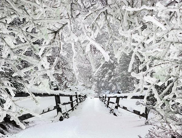 Debra and Dave Vanderlaan - Silent Path in the Snow