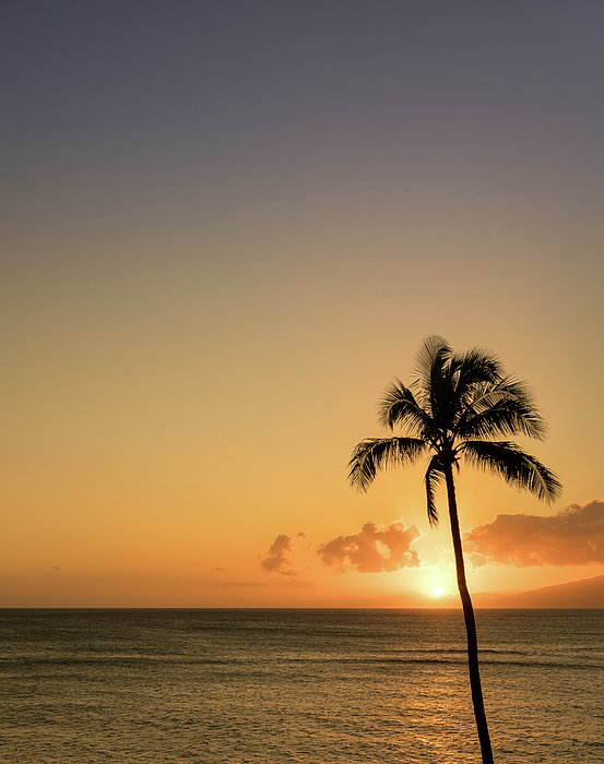 Steven Heap - Single palm tree in silhouette in sunset off Maui