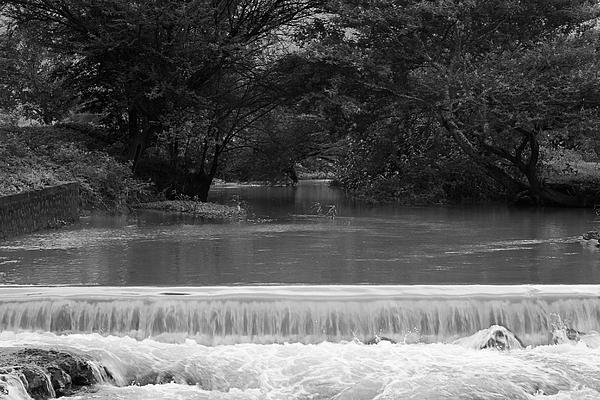 Sunil Kapadia - SKC 2578 Canopy over a River