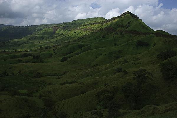 Sunil Kapadia - SKC 3554 Grassy Western Ghats
