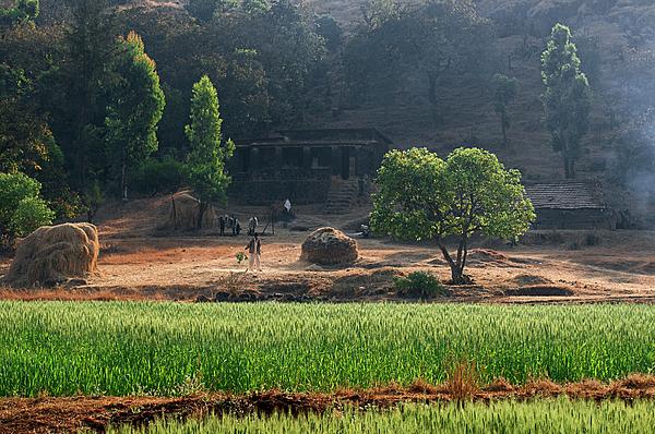 Sunil Kapadia - SKN 6457 Farmer