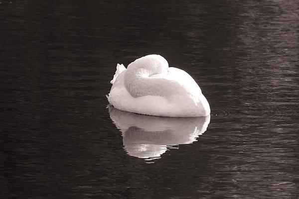 Karen Silvestri - Sleeping Beauty Reflection
