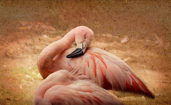 Cynthia Wolfe - Sleeping Flamingo