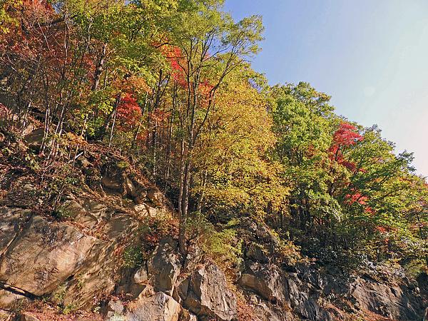 Marian Bell - Smoky Mountain Scenery 3