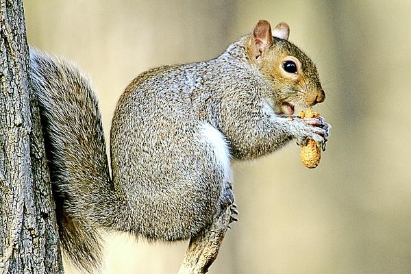 Geraldine Scull - Snack Time