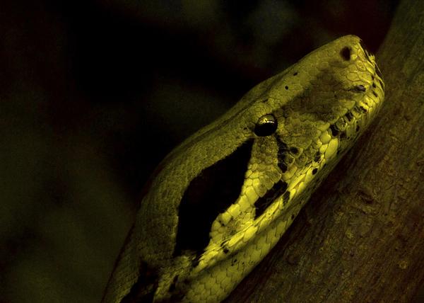 Snake Photograph